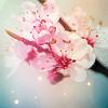 fleur_eternelle userpic