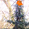 demisiv_wiz userpic