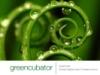 greencubator userpic
