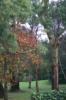 ruby_jelly: trees_autumn09