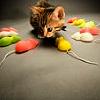 [cat] not right, -- [c:hali] emptiness
