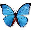 Chelsea: Butterfly