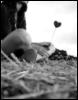 lovepmz userpic