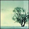 Heli: winter tree