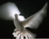 ionia, white, bird