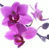 Елена Фамова: лиловое