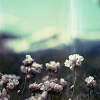 honeyvinegar userpic