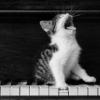 lunaatique: a piano cat