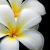 sare_meadows userpic
