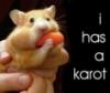 karot carrot