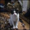 aitqandai userpic