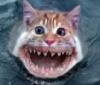Sea kitten
