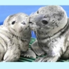 sealwhiskers userpic