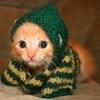 с шарфиком, милый, Котик
