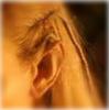 Orlando elf ear