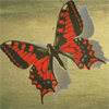lerouxpapillion userpic