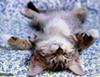 silvermooncat userpic