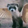 Whiffert the Cat: ferret