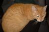 aslan_the_cat userpic