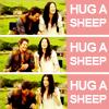Alice: los hug a sheep