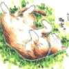 catgirl3344 userpic