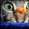 daunzerly userpic