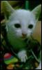 babylynneam userpic