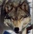 lonewolf2017 userpic