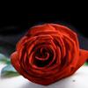 xstargazer userpic