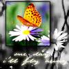 WilsonE605: butterfly