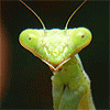 Carry Stress in the Jaw: mantis