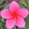 a rearranger of the proverbial bookshelf: Flower - pink
