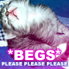 Larissa: kitty *begs*