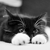 Nadine: [kitty] *peek*