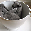 Kitty in Teacup