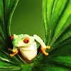 frog sees what you did thar