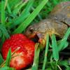 tortoise NOM