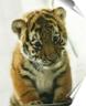 tigrishka_in userpic