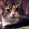 brokensoul userpic