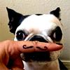 dogstasche