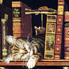 books & kitty