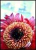 somuch_prettier userpic