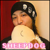 Brad C: torin - sheep