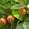 mushmulala userpic