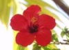 hibiscusrose userpic