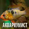 аквариумист