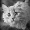 Черно-белая картинка с кошкой