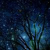 starry trees