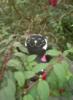 happicat userpic