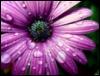 myamarantine userpic